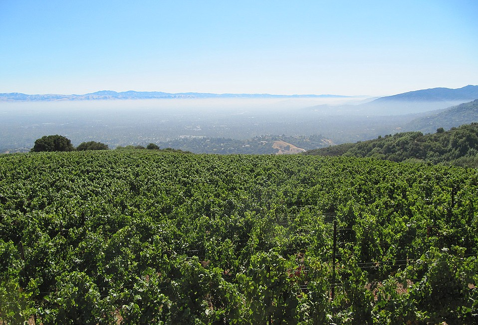 Sierra Madre Vineyard