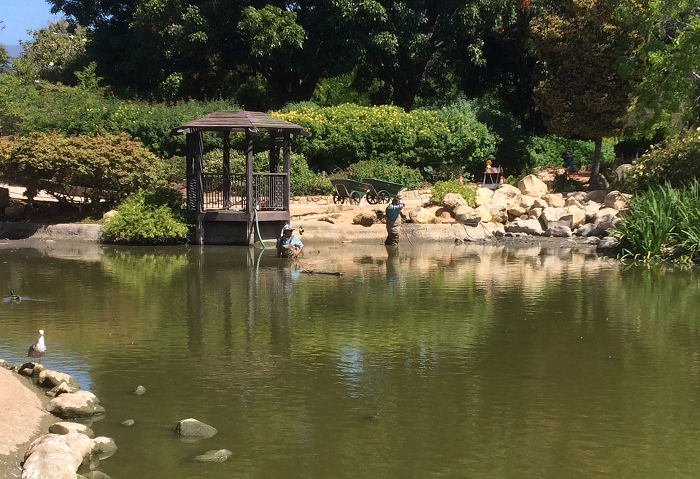 Pond at Alice Keck Park Being Drained