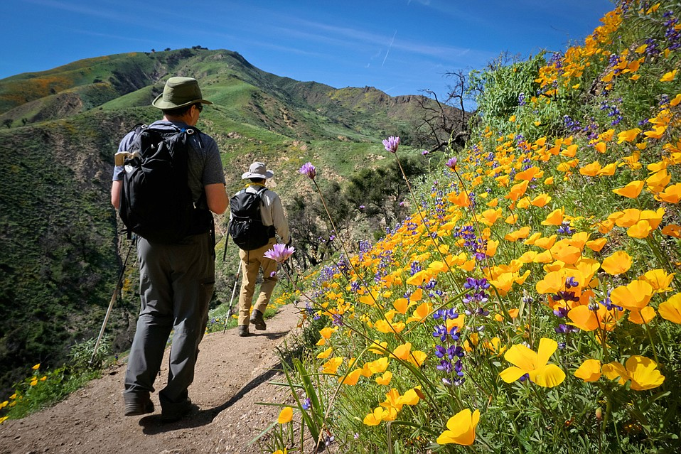 Two hikers trekking amongst the wildflowers on the Aliso Trail.