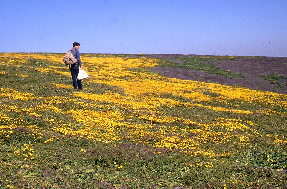 Ralph Philbrick documented the botanical wonders of California's islands. He's pictured here on Santa Barbara Island in 1969.