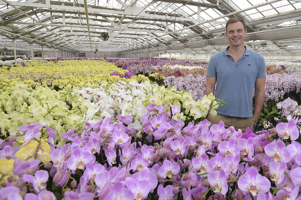 Toine Overgaag at Westerlay Orchids