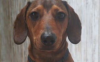 Dante has been missing since August 12, last seen at Lake Cachuma.