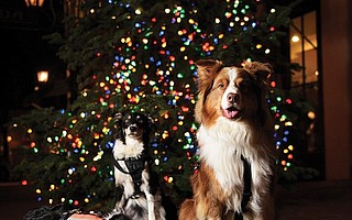From left, Mojo, Chaos, and MacGyver are three of the six Santa Barbara County Search and Rescue Dogs that will be the 66th Annual Downtown Holiday Parade Grand Marshals. Not pictured are Rica, Reilly, and Keegan, but all six will be in the parade this Friday with their respective partners: Tracee Walker, Juanita Smith, Rick Stein, Sheila Malavasi, Ann Marie Cullen, and Shirley Smith.