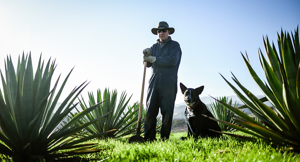 Neither much of a farmer nor drinker, La Paloma Ranch manager John Kleinwachter, (pictured with Vinnie the dog) finds himself as one of California's first jimadors, the Mexican name for agave harvesters.