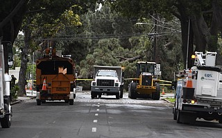 Rain-saturated grounds and gusty winds brought down a pine tree across De la Vina Street at De La Guerra Street on Monday, causing damage to power and communication lines as well as at least two vehicles.