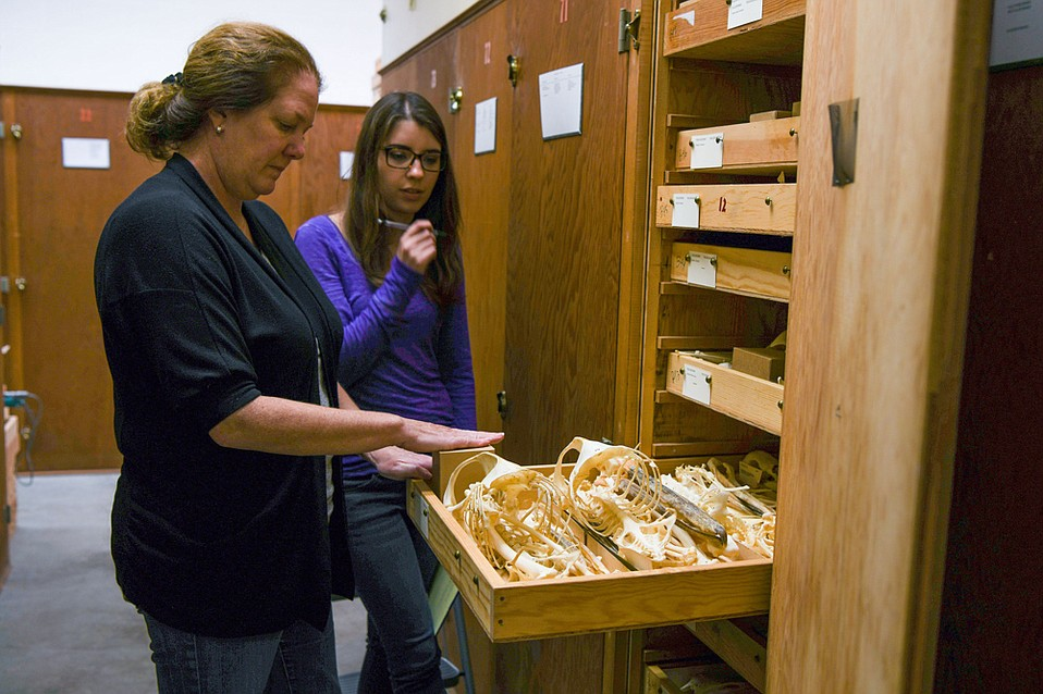 Dr. Krista Fahy and Curatorial Assistant Julia Schorr examine museum specimens that are being transferred from the wooden boxes to metal containers to better preserve them.