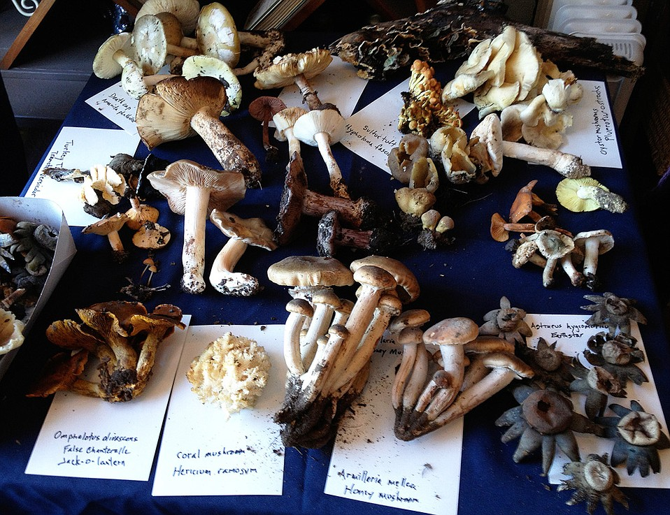 Stephan Bedford's annual fungus bash is now elevated to a full-on, Los Alamos–wide Mushroom Festival.