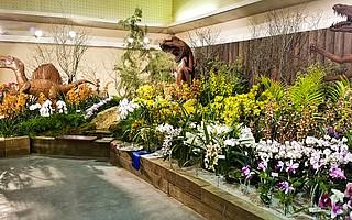The upcoming annual Santa Barbara International Orchid Show